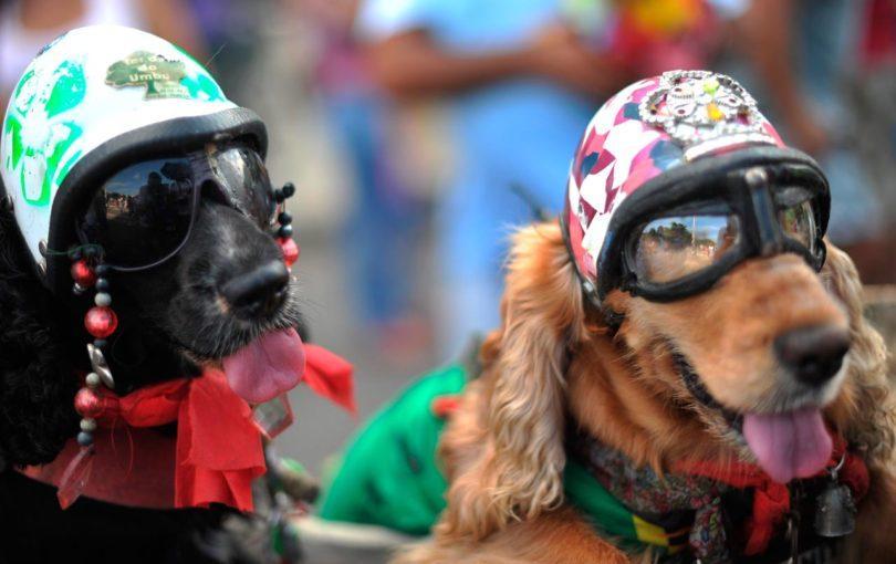 P14- perros